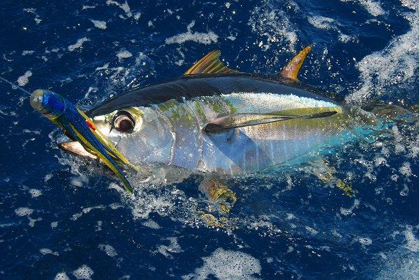 Tuna Tremendous - Mesmerize