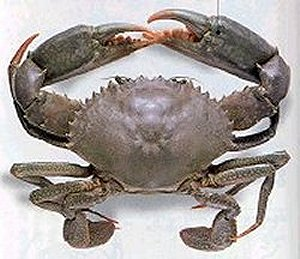how to cook whole mudcrab
